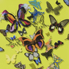 Christian Lacroix Butterfly Parade Safran PCL008-04 Thumbnail
