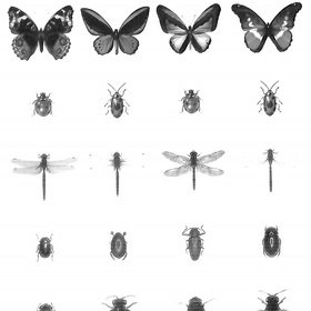Brian Yates Pen Drawn Insects 143-158827