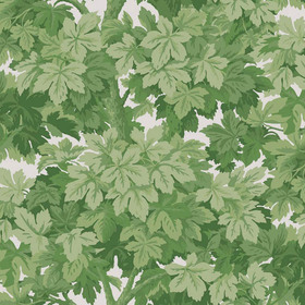 Cole & Son Great Vine Leaf Green 98-10045