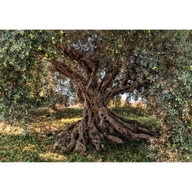Fine Decor Olive Tree 8-531