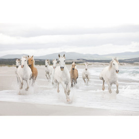 Fine Decor White Horses 8-986