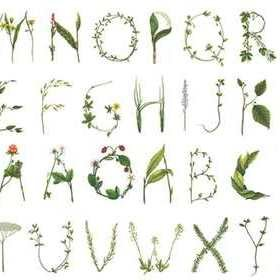 Rebel Walls Floral Alphabet R13195