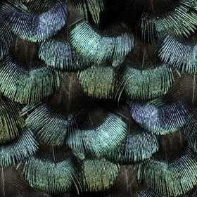 Rebel Walls Peacock Plumage R15091