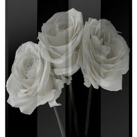 Arthouse Black & White Roses 008111