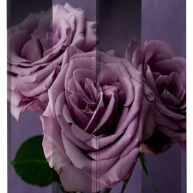 Arthouse Plum Roses Screen 008131