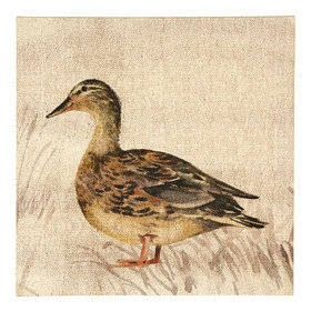 S.J. Dixon Duck Printed Canvas 003697