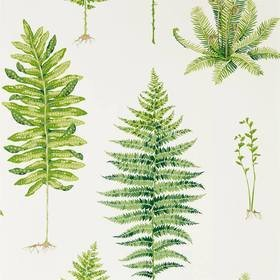 Sanderson Fernery Botanical Green 216633