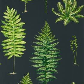 Sanderson Fernery Botanical Green-Charcoal 216634