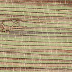 Natural Furniture Company Ltd Pistachio Grasscloth