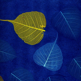 Natural Furniture Company Ltd Rich Blue Leaf