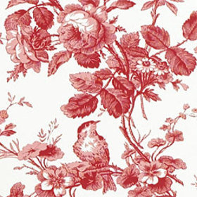 Thibaut Isabelle Red-White T7352